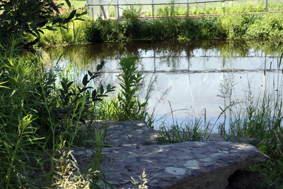 moon pond rock perch