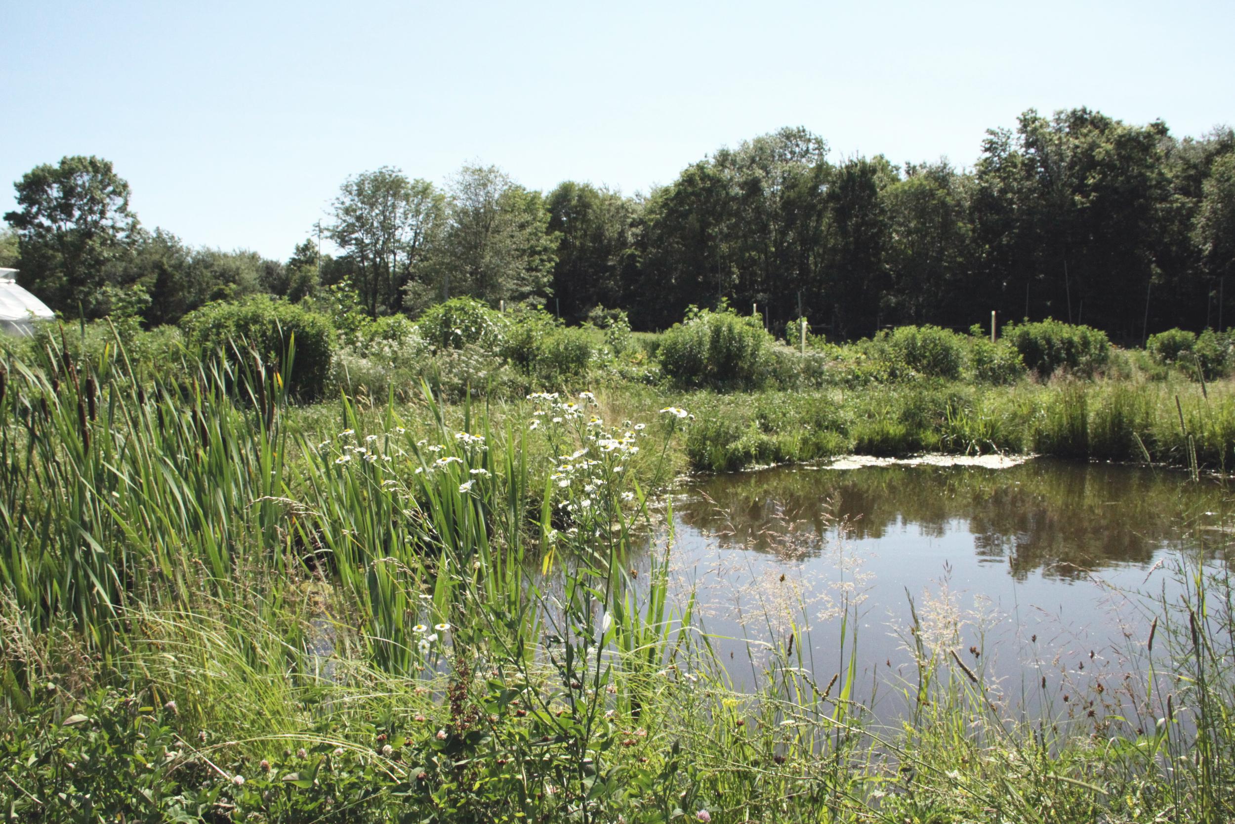 Center field, Duck Pond, 2014