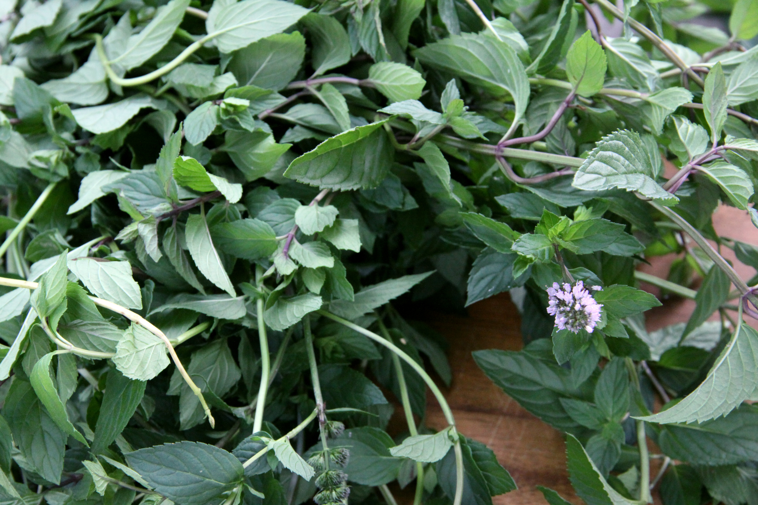 Copy of Fresh culinary herbs