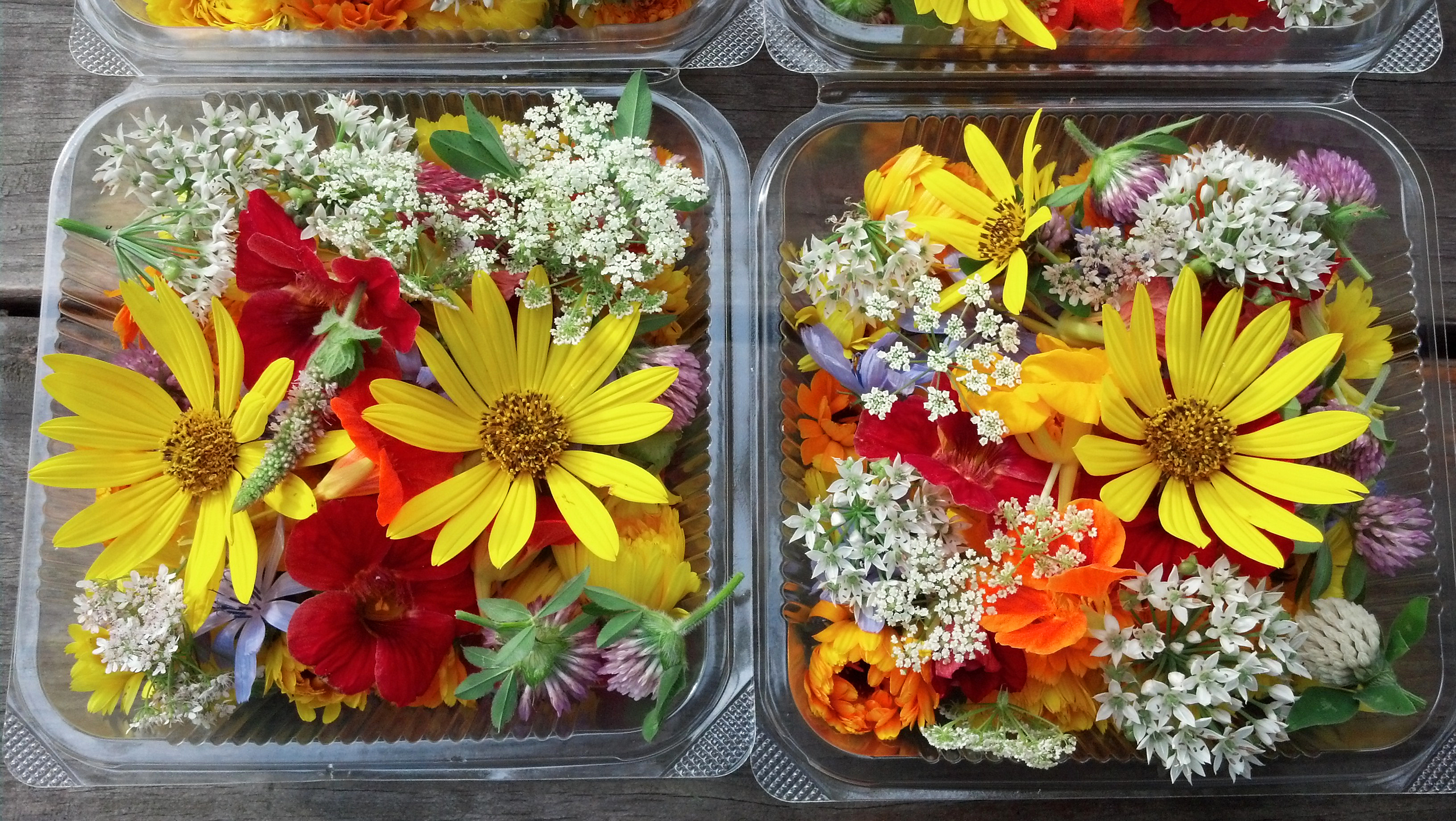 Copy of Edible flowers