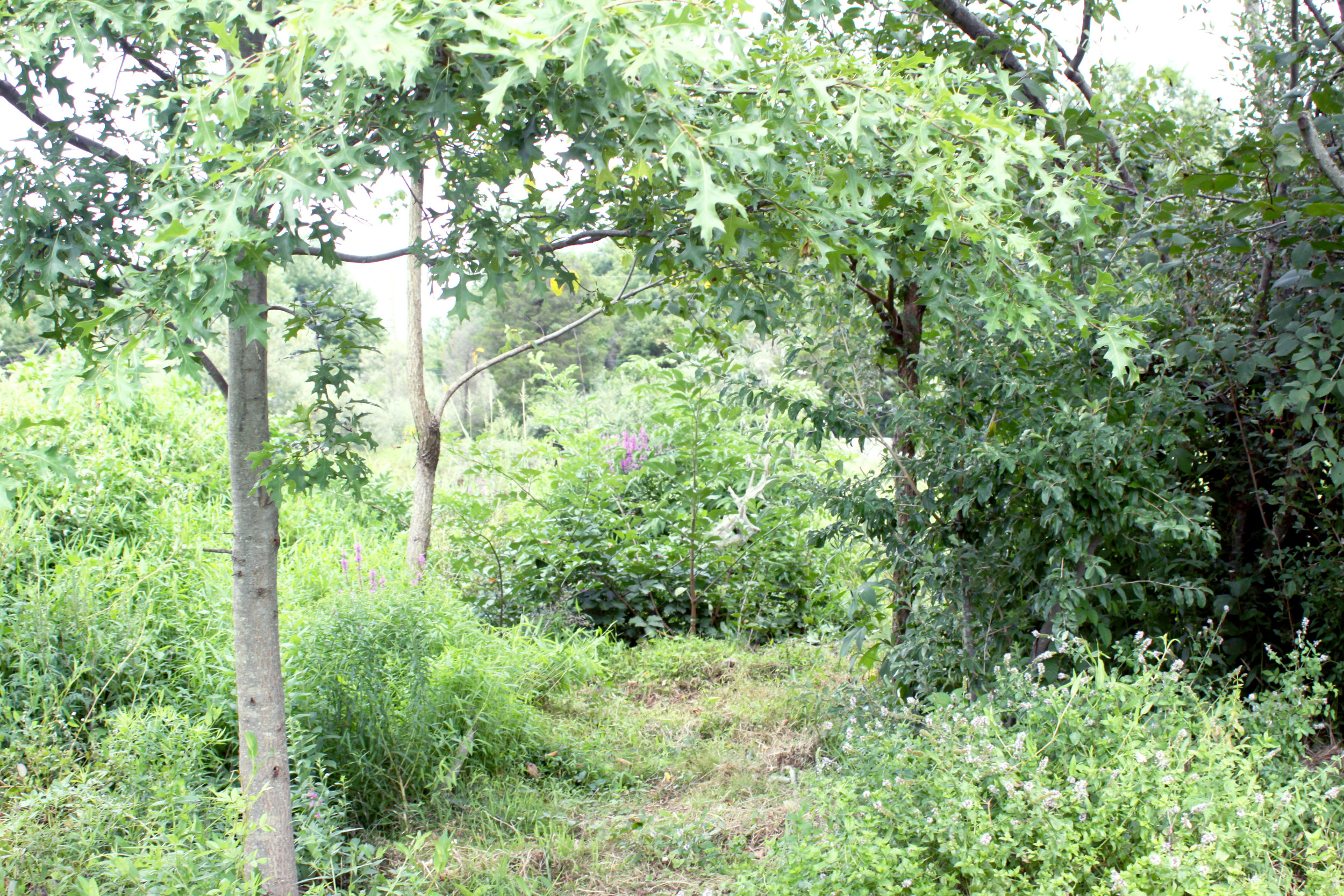 banner-hedgerow_6006.jpg