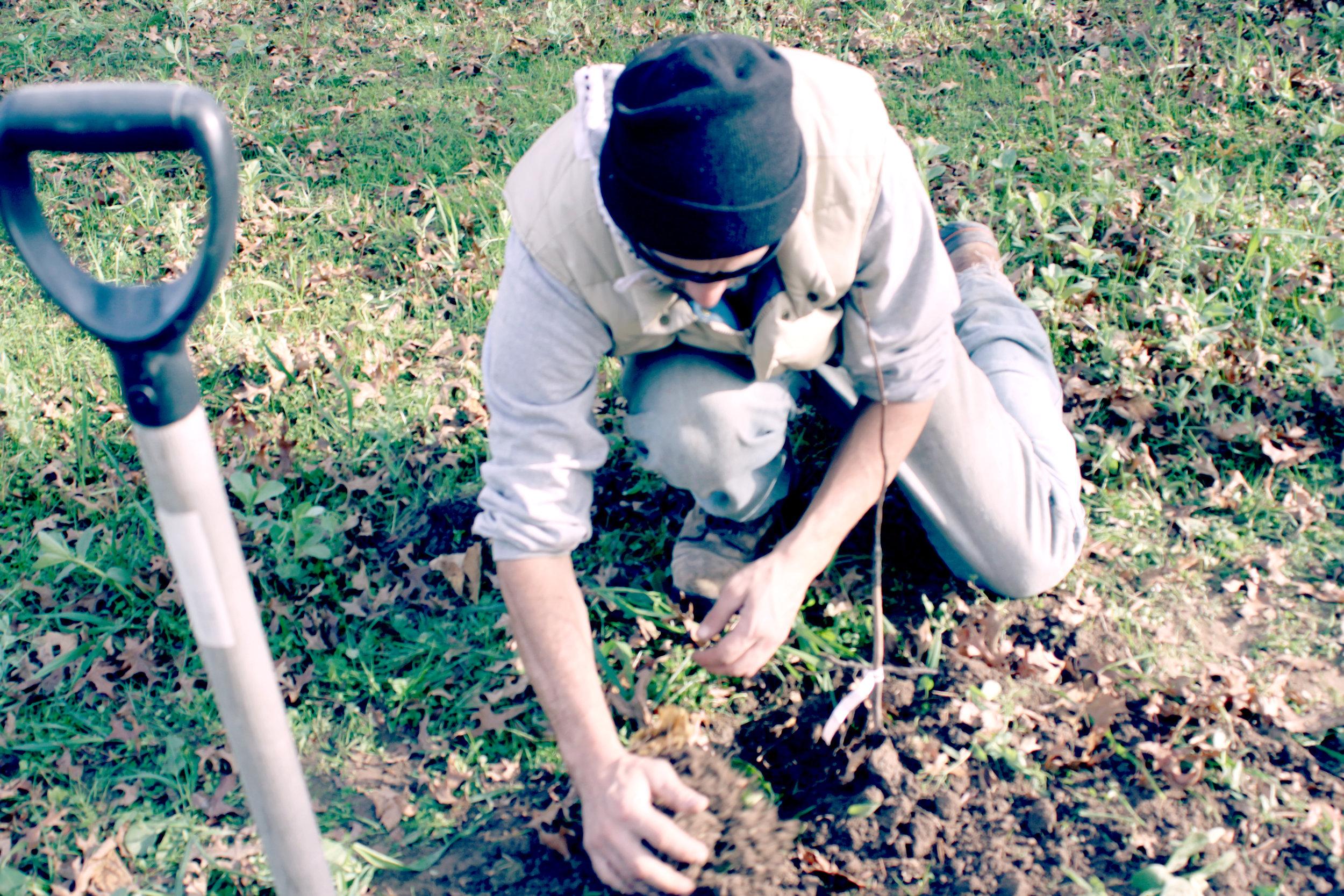 banner-treeplanting_6539.jpg