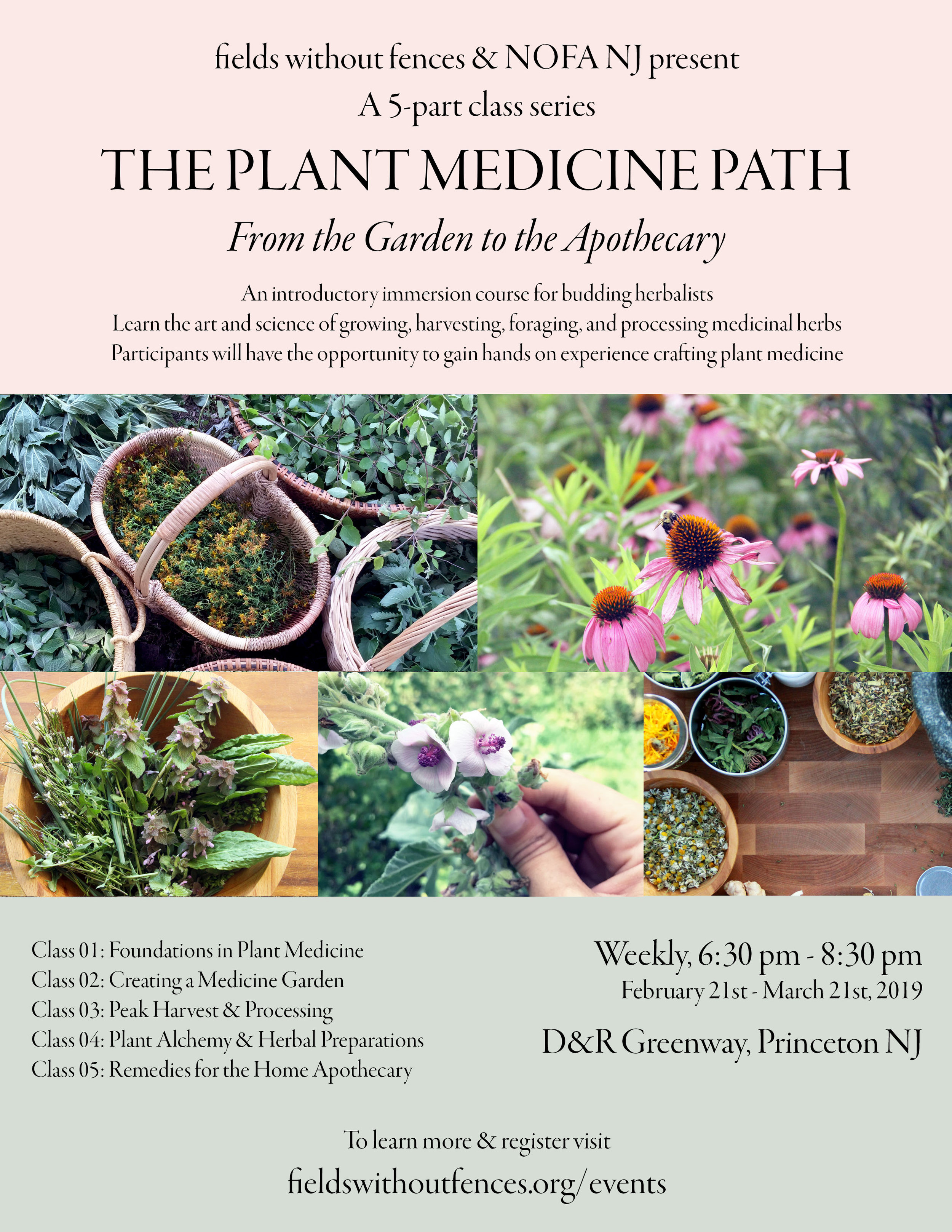 Course-Poster-Plant-Medicine-Path.jpg