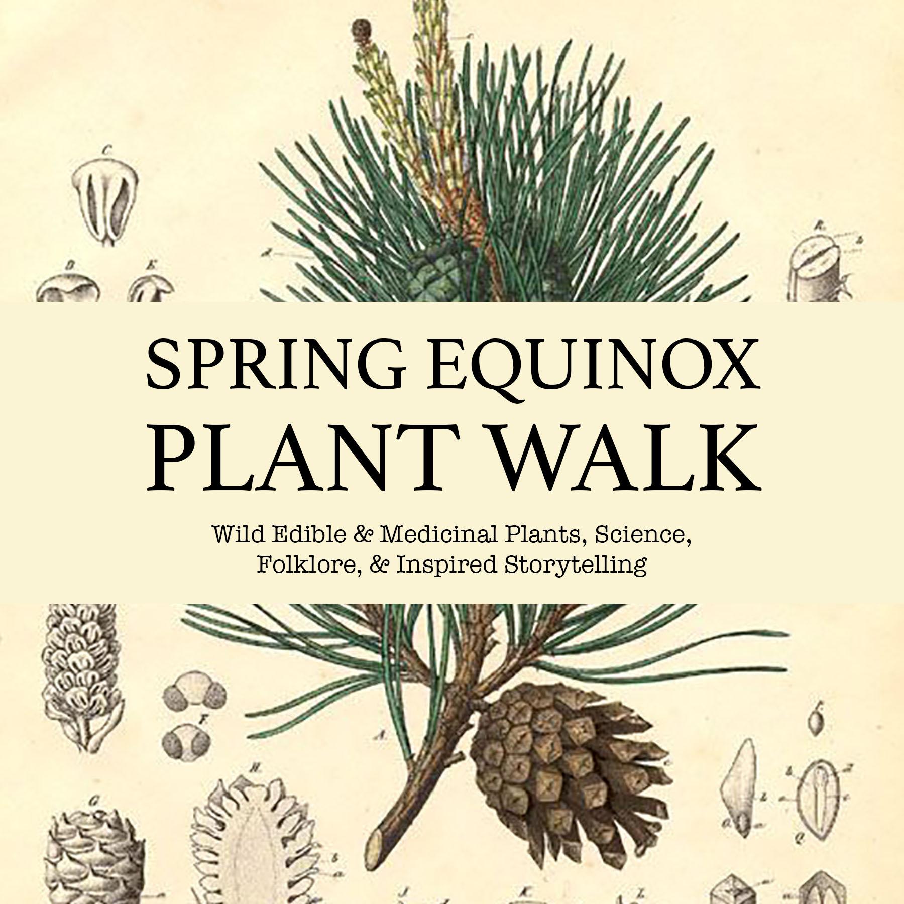 Spring-Equinox-Plant-Walk-Promo.jpg