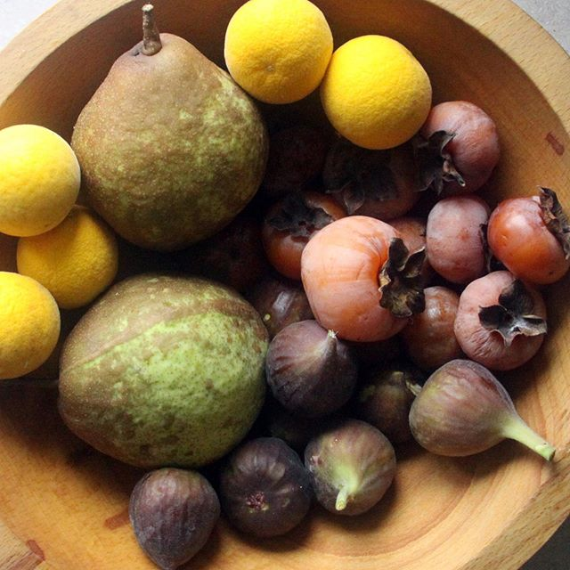 Our fruit overfloweth… American Persimmon, Fig, Trifoliate Orange, and Pear in harvest right now on the farm. Loving the deep, complex flavors of fall fruit.  #forestgardenfarm #organicfruit #permaculture #wildfruit #wildgardens #persimmon #pear #trifoliateorange #fig #agroforestry #fieldswithoutfences