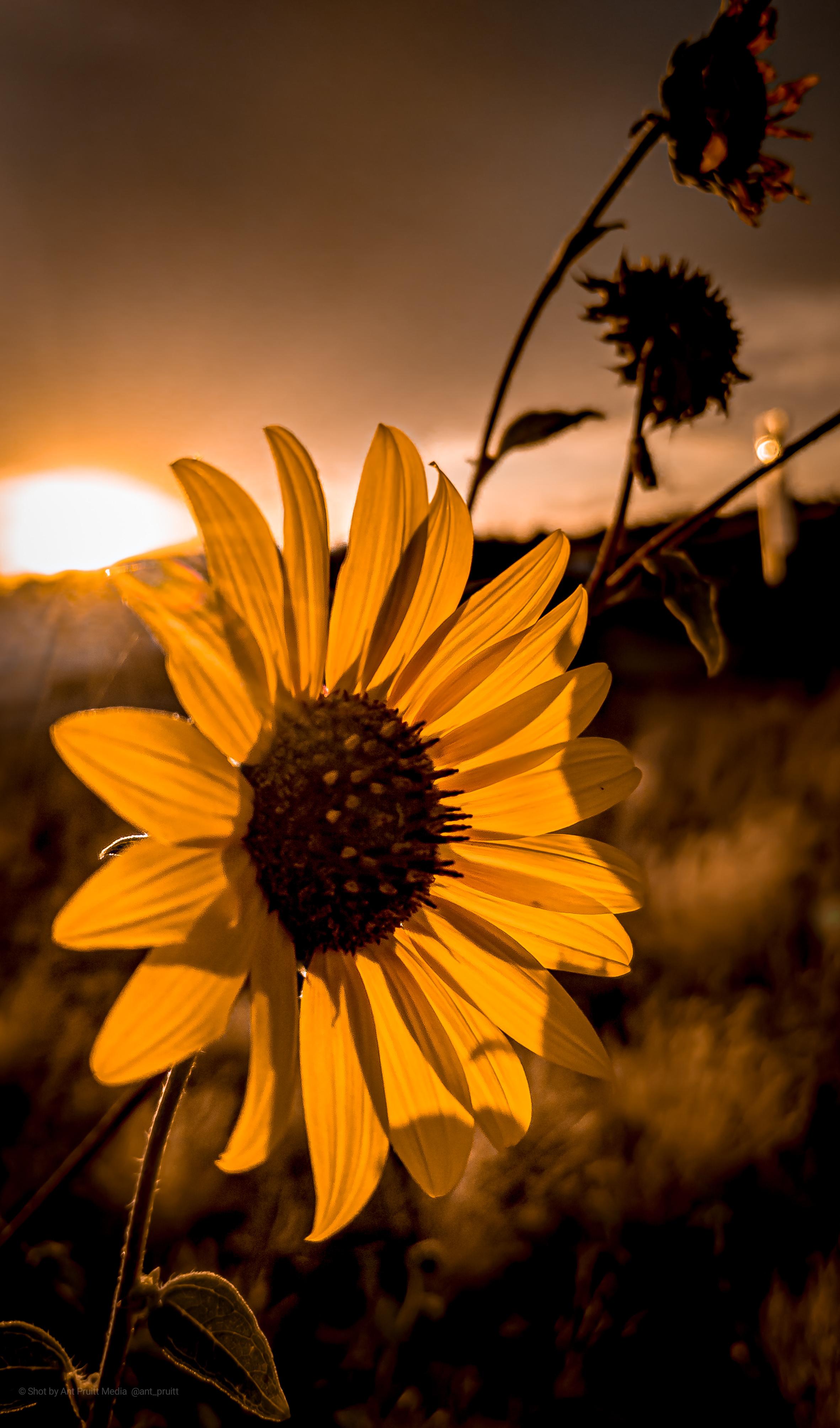 desert-sunset-in-arizona.jpeg