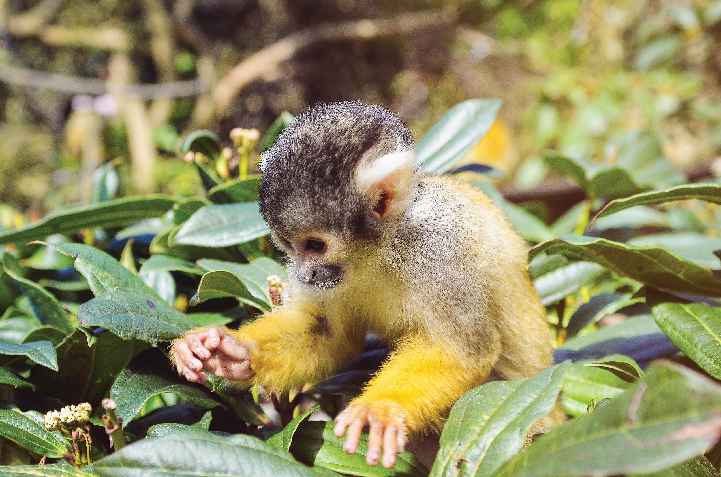 117/365 Cheeky Monkey