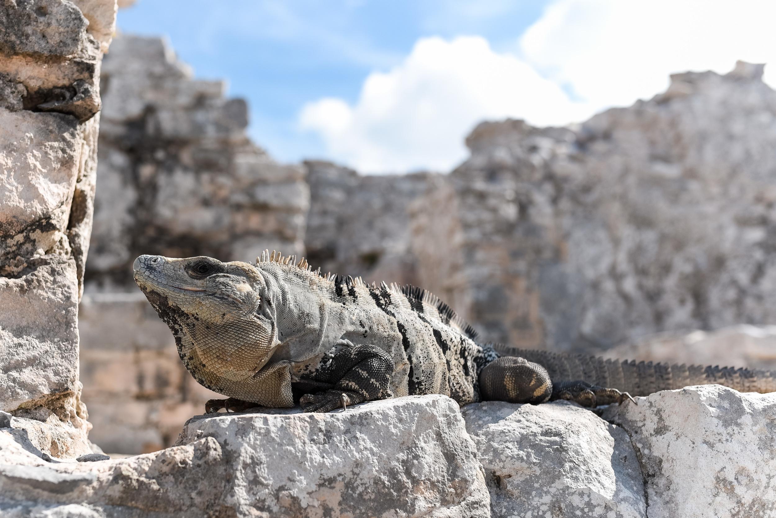 Mexico-Mayan-Ruins-8.jpg