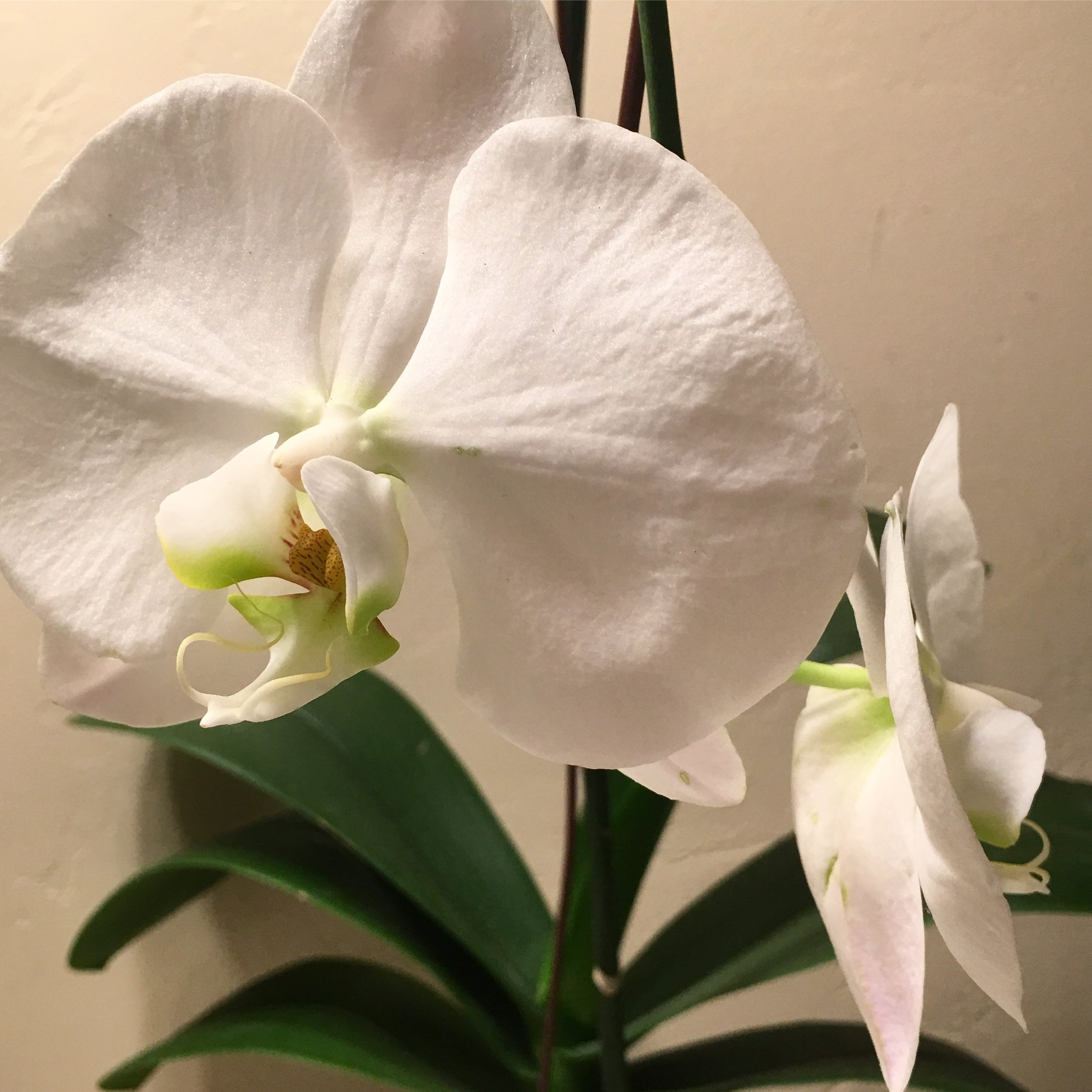Two Final Orchids.JPG