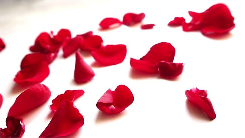 rose petals.jpg