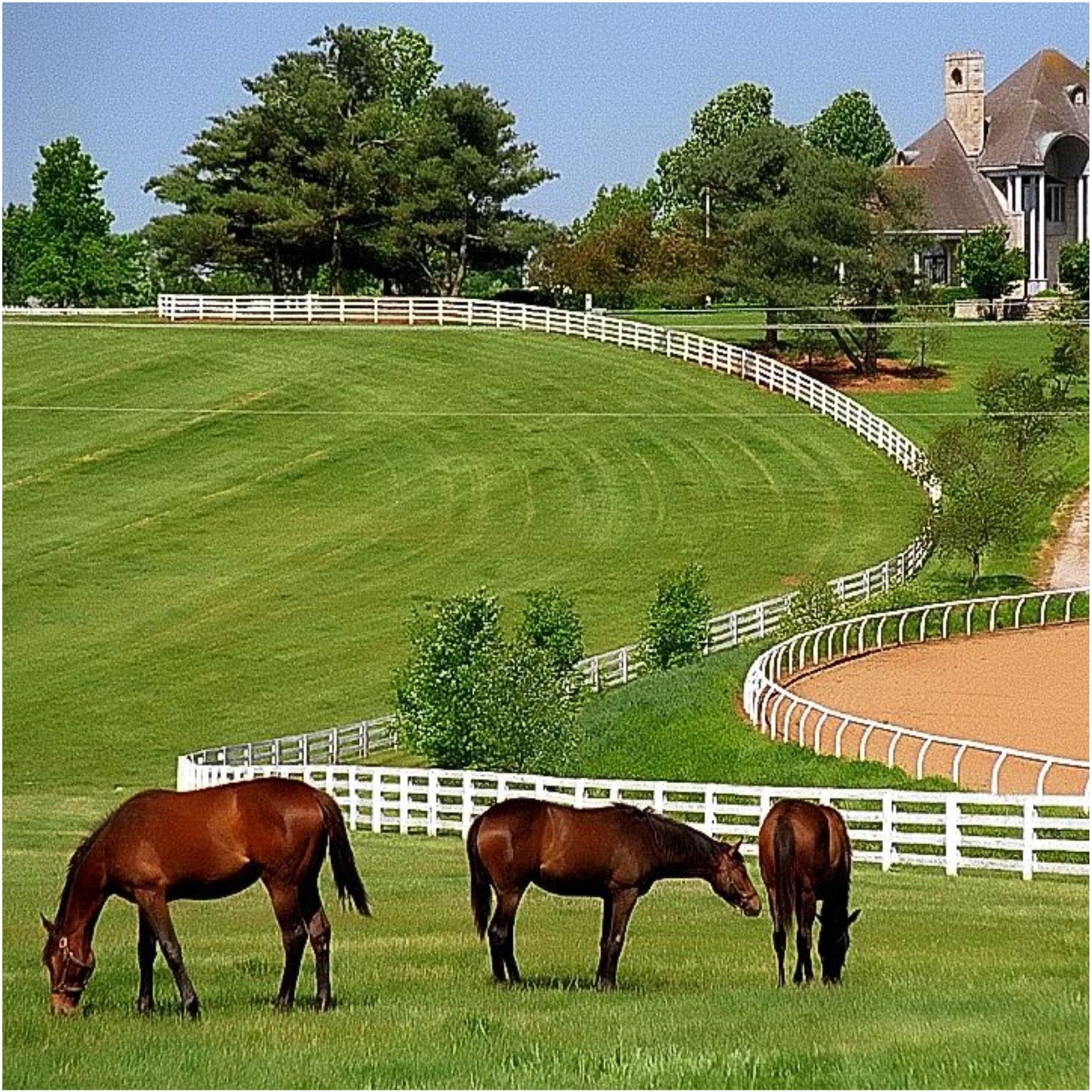 Horse Farm Picnic.jpg