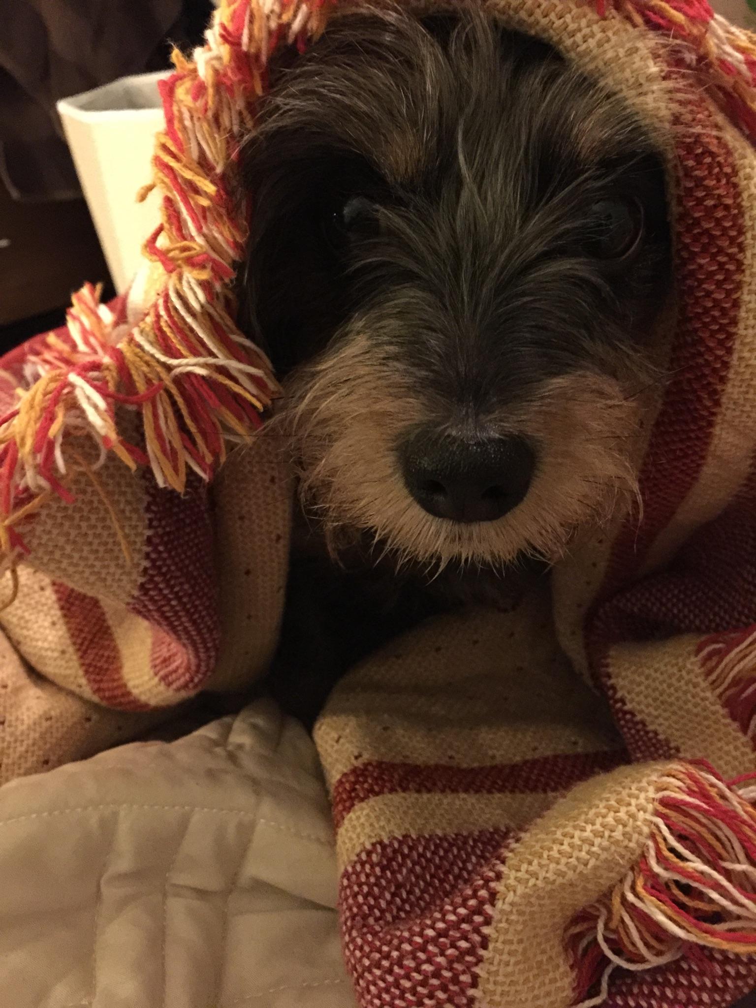 Duple in a blanket