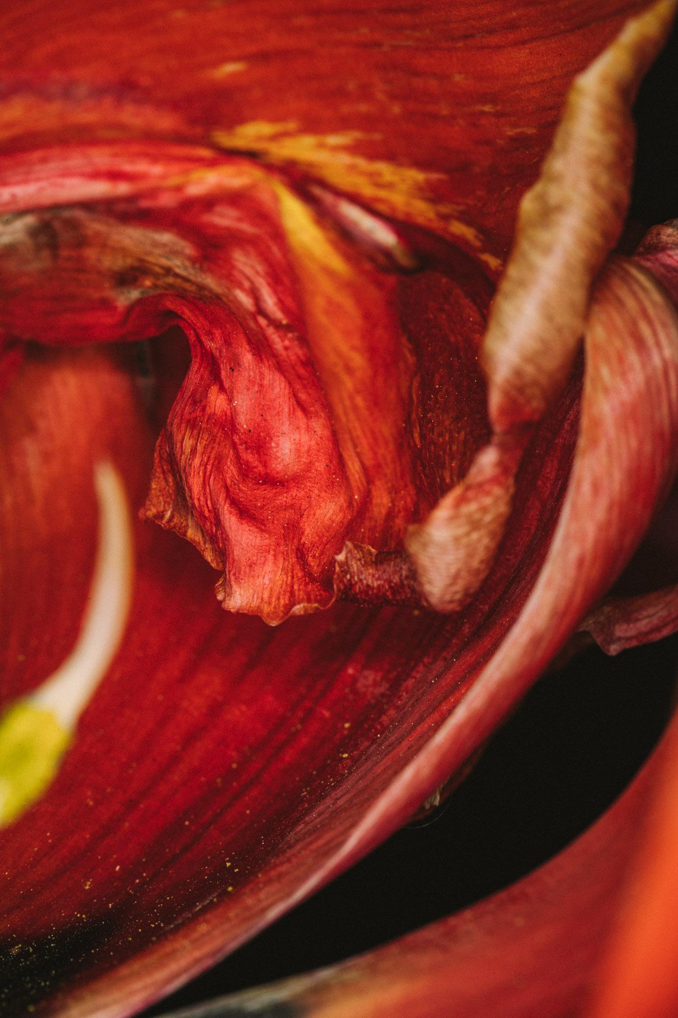 20180420_tulips_0170.jpg