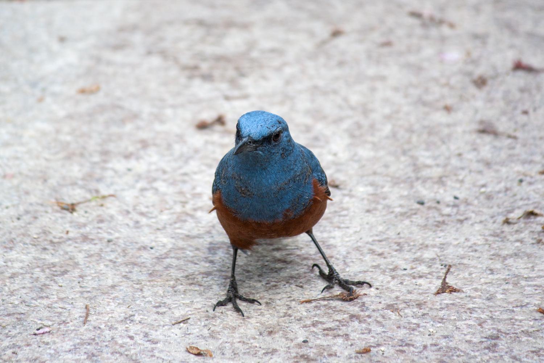 Unknown bird, Kyoto
