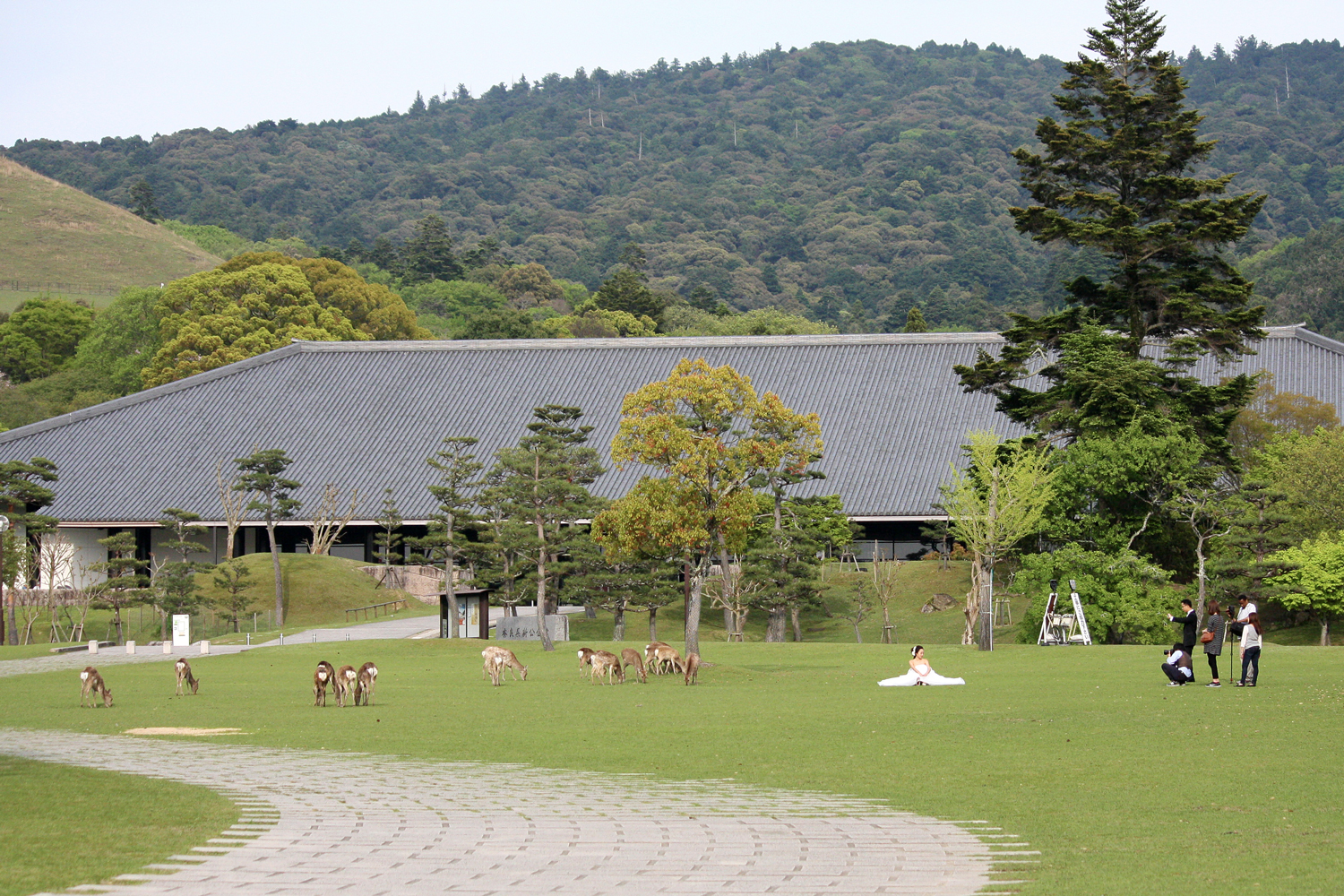 Wedding pictures with Sika Deer, Nara