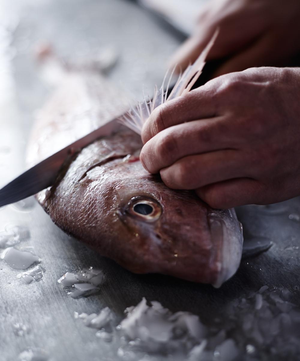 upg+fish2+photoshoot+melissa+collison.jpg