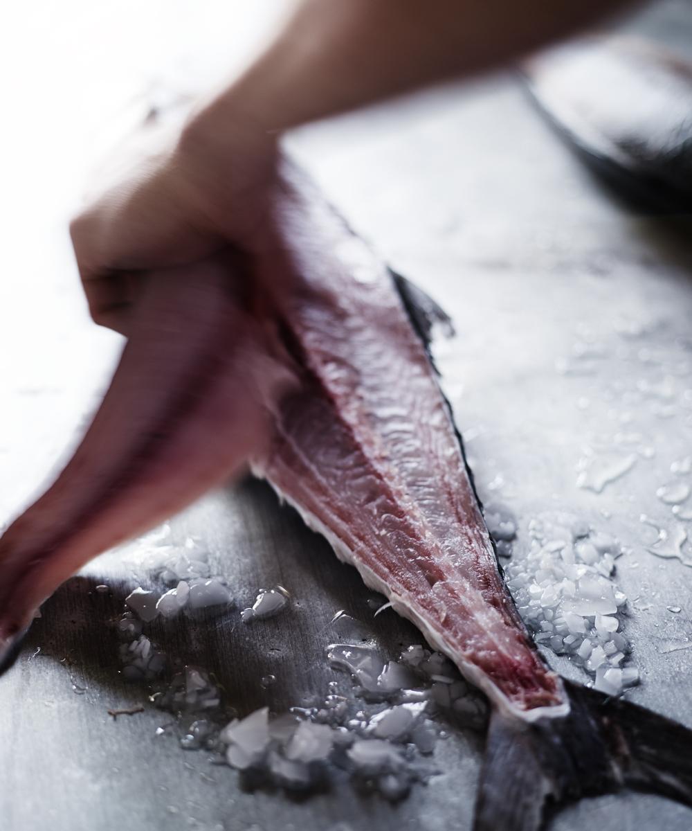 upg+fish+photoshoot+melissa+collison.jpg