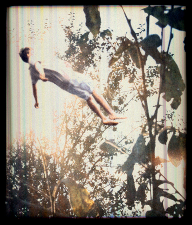 Falling in Trees 12, 2006 40 x 34 inches archival pigment print