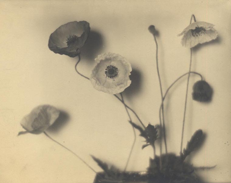 Flower Studies, c.1920  vintage platinum/palladium print 6.5 x 7.75 inches