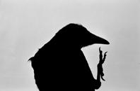 Masahisa Fukase: The Solitude of Ravens
