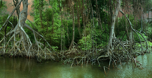 Forest, 2006 20 x 40 inches 25 x 50 inches edition of 5 chromogenic dye coupler print mounted to dibond aluminum