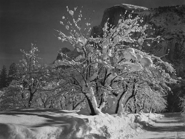 Half Dome, Orchards, Winter, Yosemite National Park, c. 1935  vintage silver print 22 x 28 inches