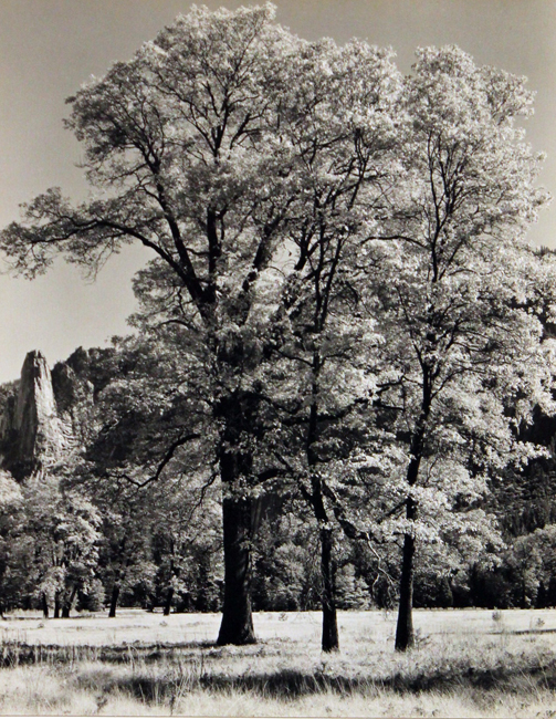 Autumn-Yosemite, c. 1932 early silver print 8.75 x 7 inches