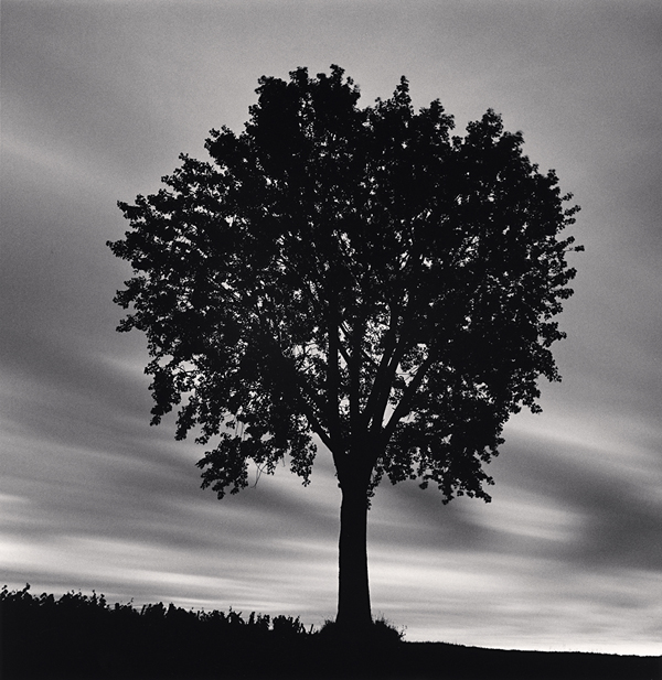 Chateau Lafite Rothschild, Study 14, Bordeaux, 2012 8 x 7.75 inches edition of 45 toned silver print