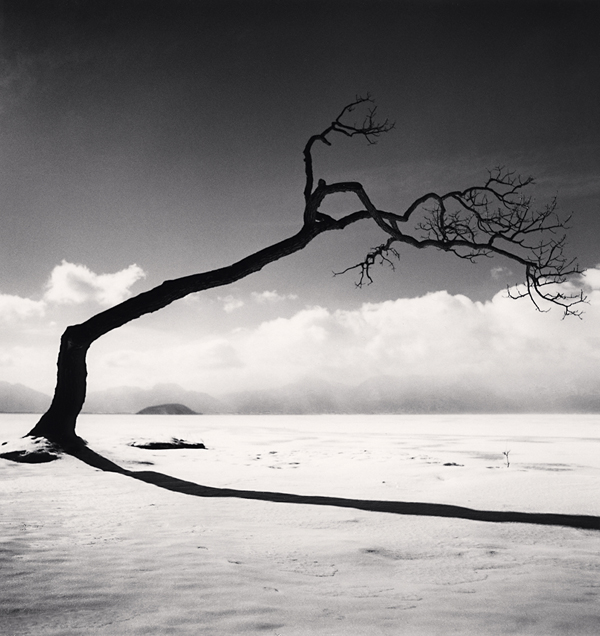 Kussharo Lake Tree, Study 10, Kotan, Hokkaido, 2005 8 x 7.5 inches edition of 45 toned silver print