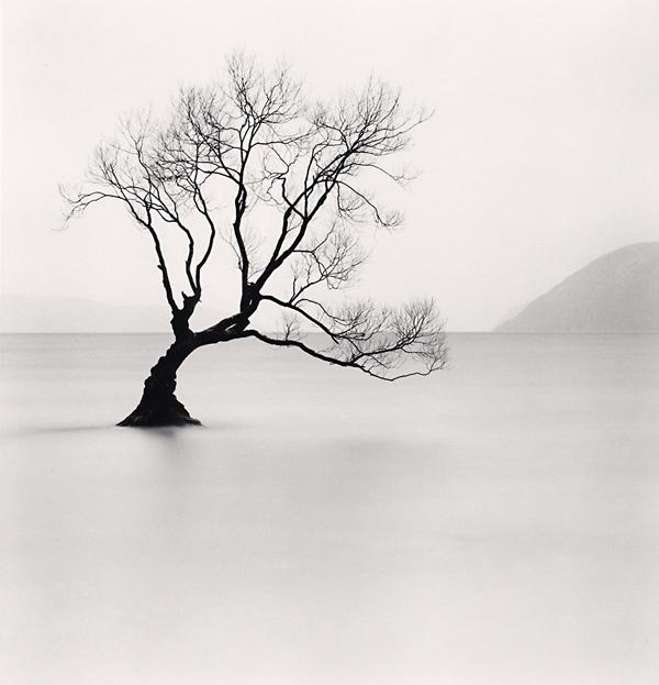 Wanaka Lake Tree, Study 1, Otago, 2013 8 x 7.75 inches edition of 45 toned silver print