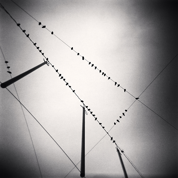 Fifty Two Birds, Zurich, Switzerland, 2008 7.75 x 7.75 inches edition of 45 toned silver print