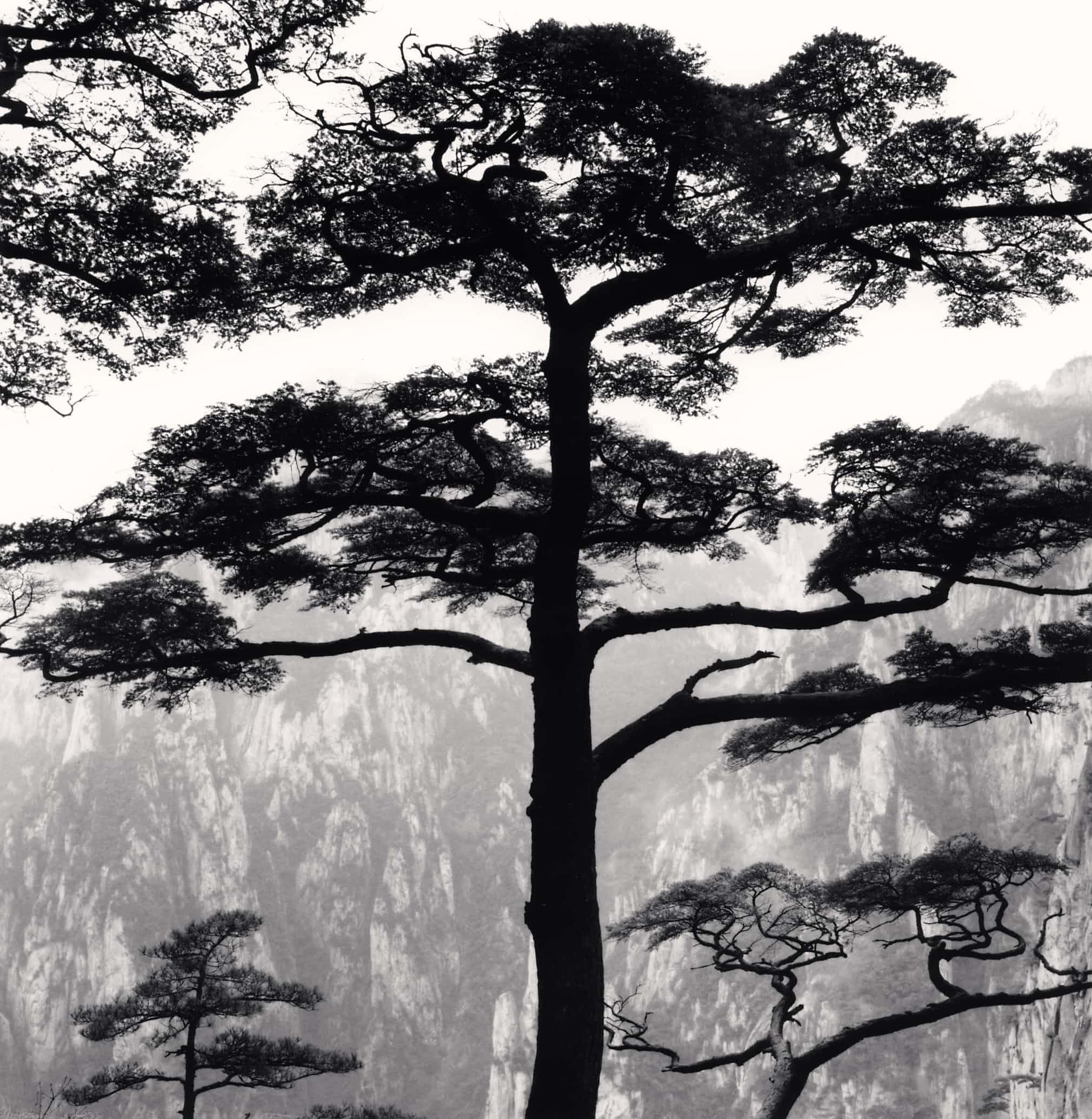 Timber! Michael Kenna's magical trees – in pictures