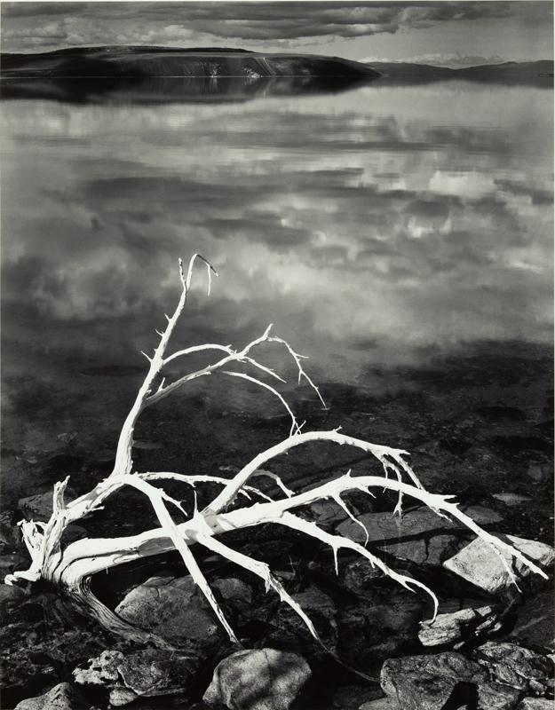 w_Ansel Adams White Branches, Mono Lake, California, 1950.jpg