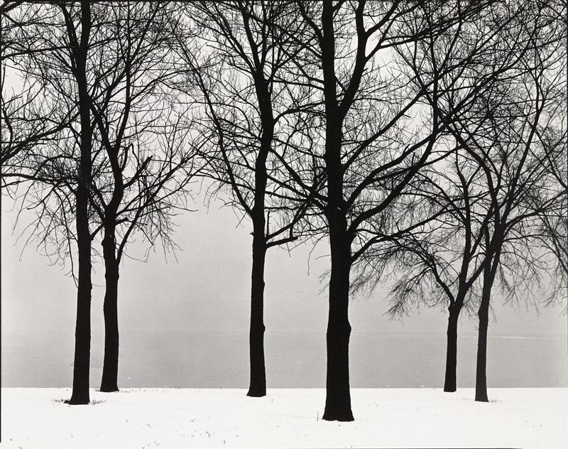 w_Harry Callahan Chicago (trees in snow), c. 1950.jpg