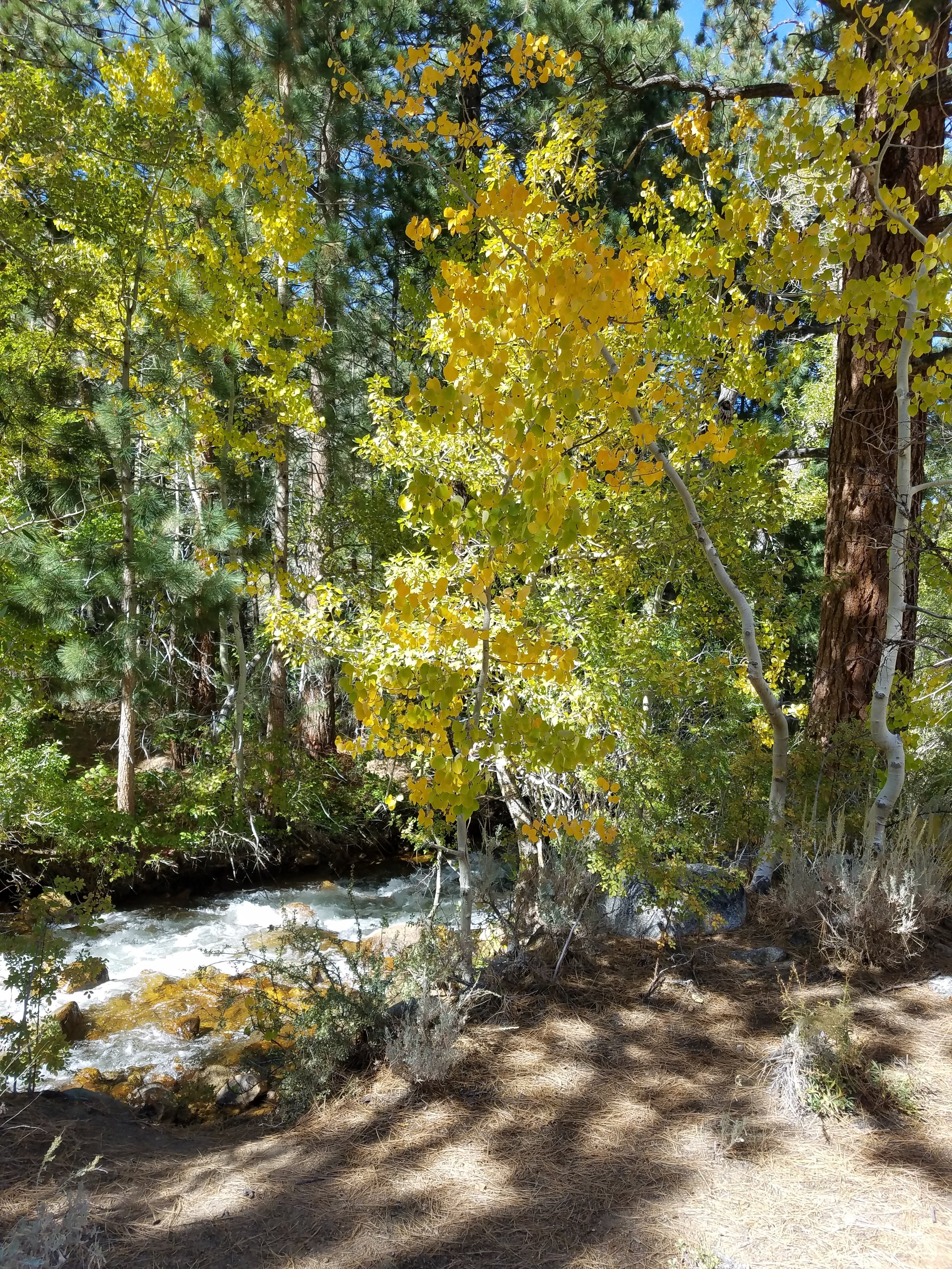 Rock Creek.jpg