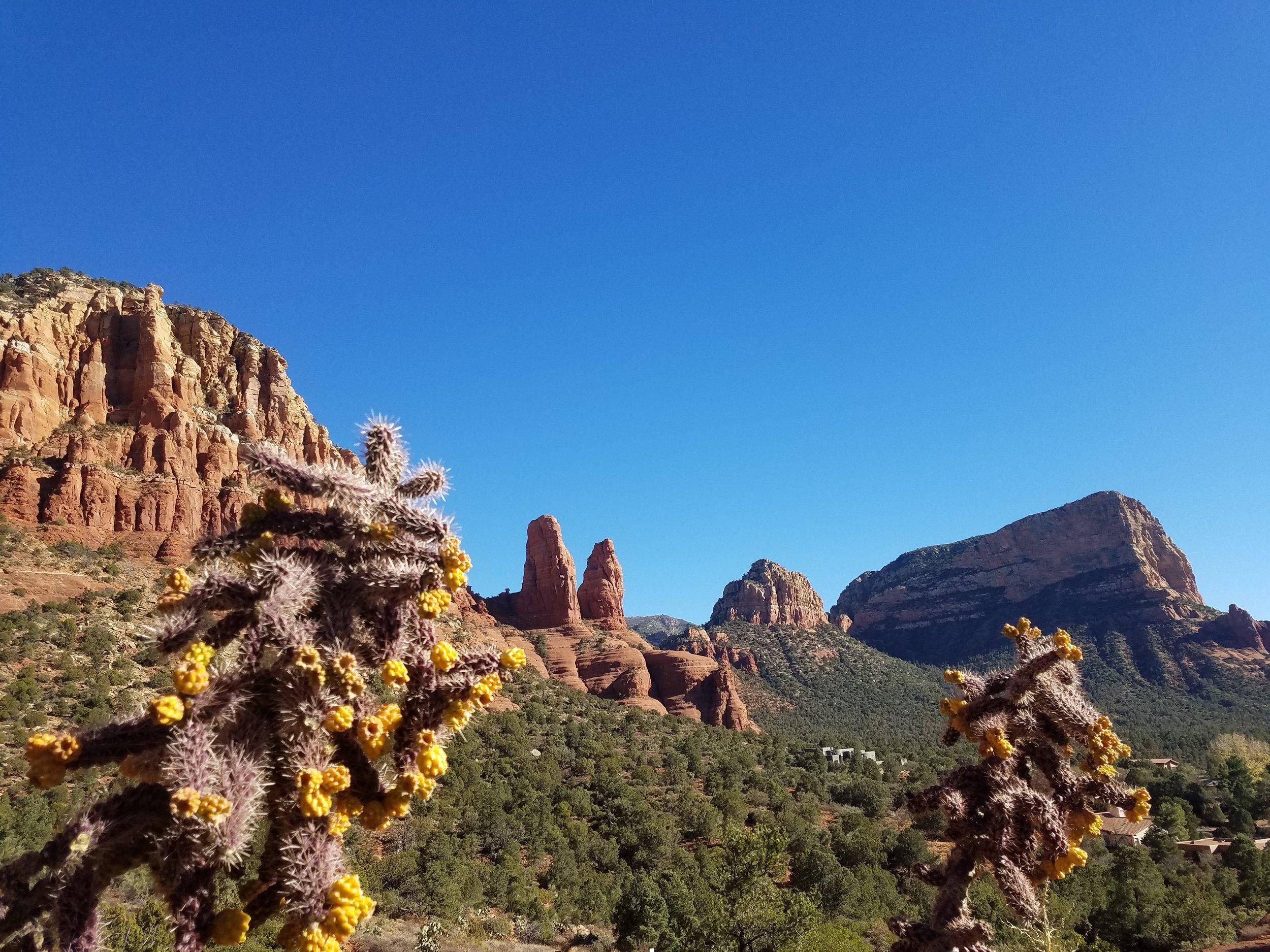 Cactus Sedona.jpg