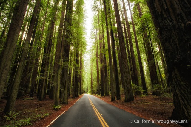 image of Avenue of the Giants from California Through My Lens