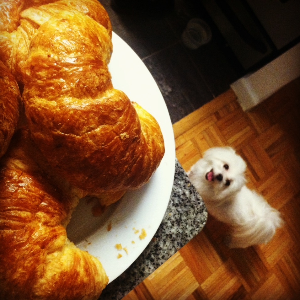 """""""Can I get a croissant?"""""""
