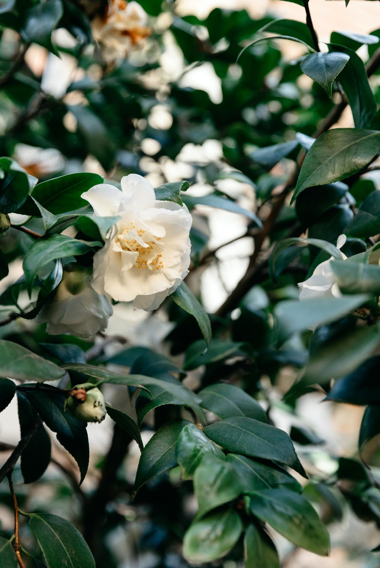 erin latimore wedding photography mudgee canberra alby & esthers_015.jpg