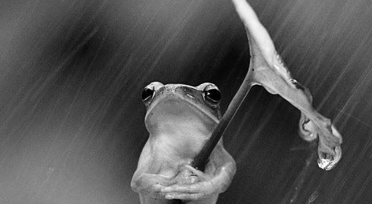 Very Serious Frog