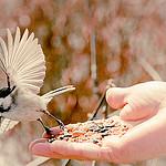 feed.thumb.jpg