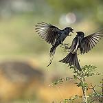 two_birds.thumb.jpg