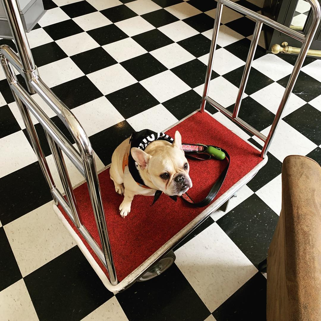 Dog Cart.jpg