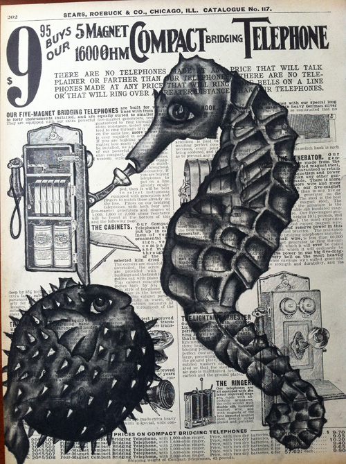 """Seahorse & Blowfish   Charcoal on antique catalog page, 8 1/2"""" x 11"""""""