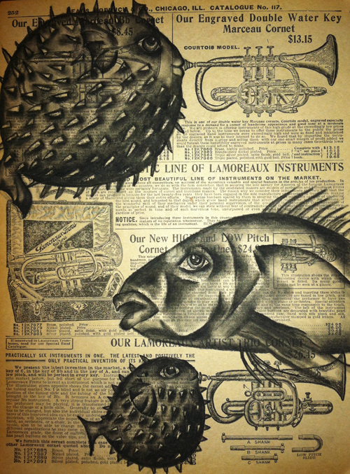 """Blowfish, 2012   Charcoal on antique catalog page, 8 1/2"""" x 11"""""""
