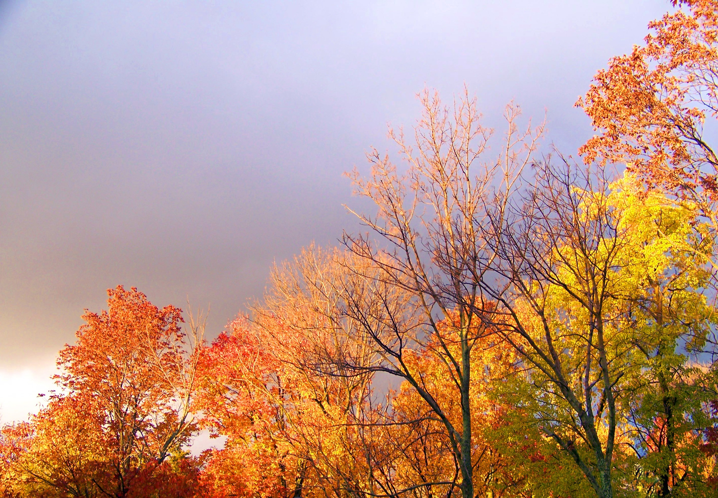 Obligatory photo of turning leaves and mildly threatening sky...