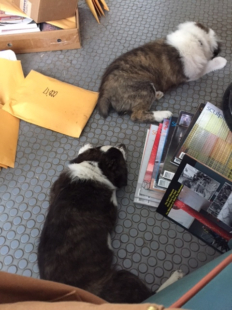 Cash and Millie sleeping amongst tax crap and art mags...