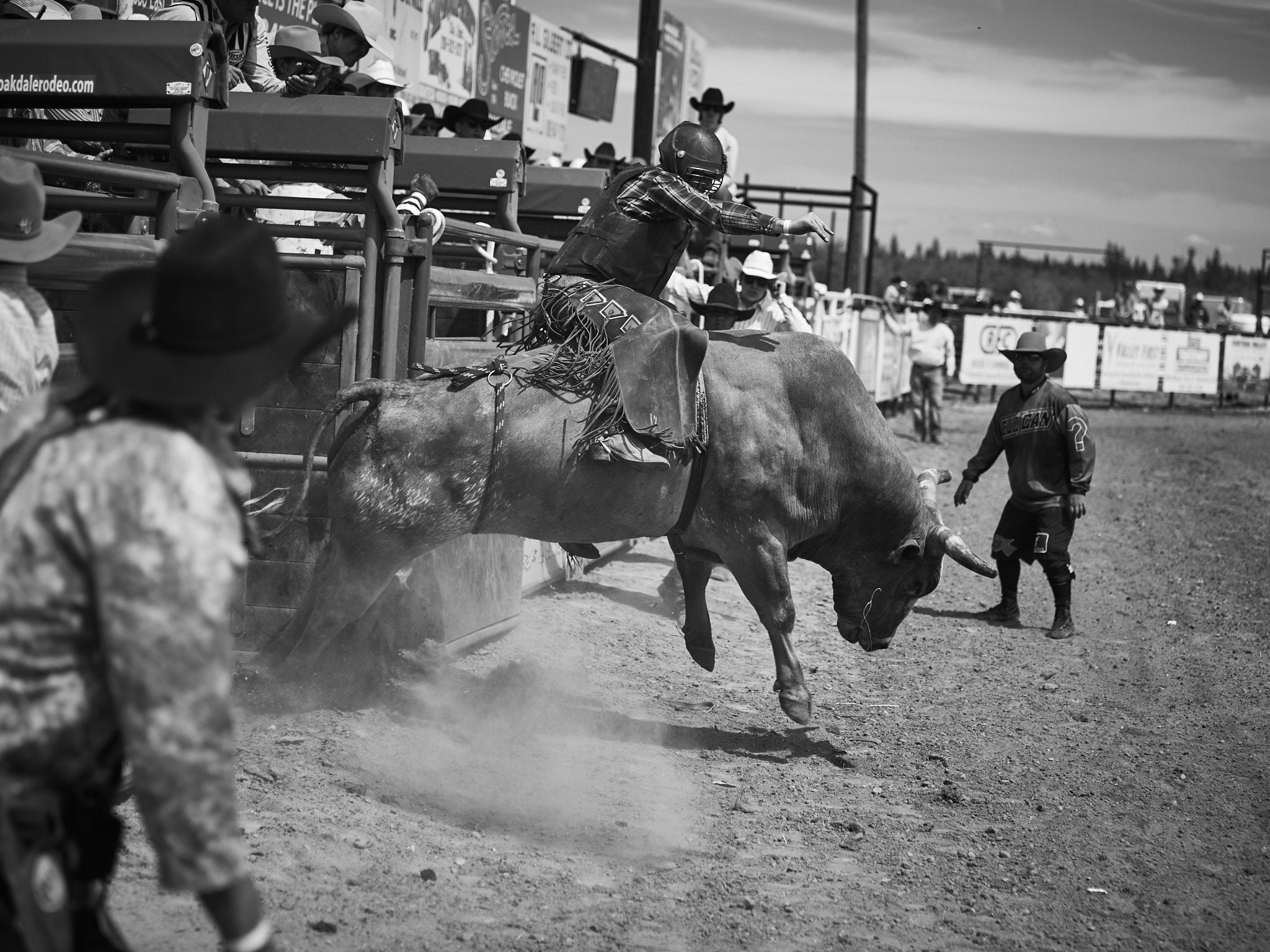 Rodeo_2019_225.jpg