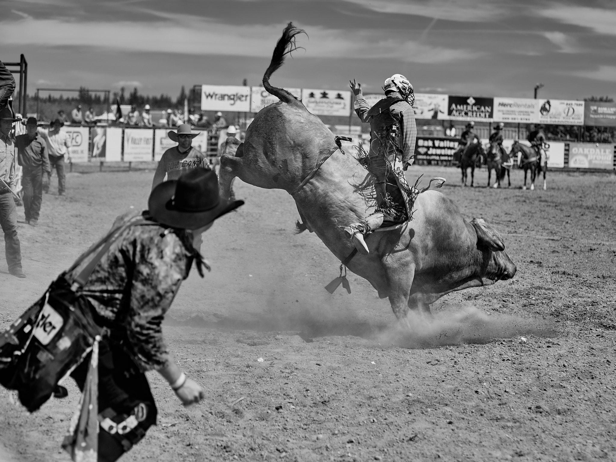 Rodeo_2019_374.jpg
