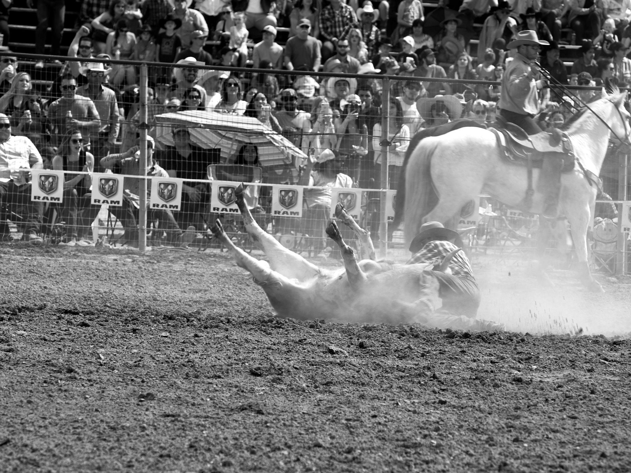 Rodeo_2019_672.jpg